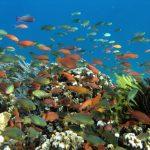 Bersyukur Yuk Sama Tuhan Atas 10 Keindahan Alam Indonesia Berikut Ini
