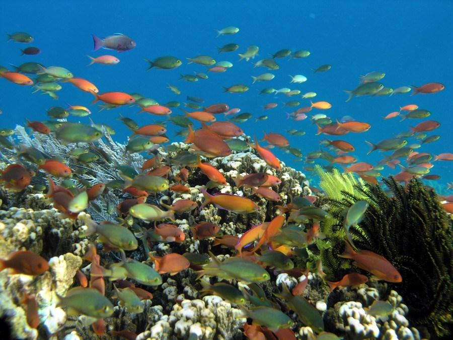 keindahan-bawah-laut-bunaken