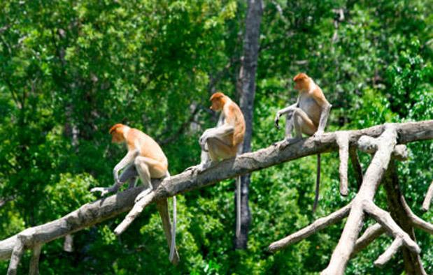 yuk-pelajari-beberapa-ciri-hutan-hujan-tropis-berikut-ini-biar-kamu-tambah-pinter
