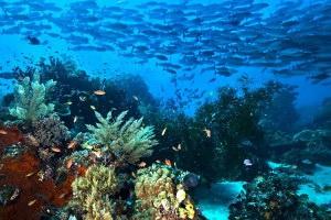 wisata raja ampat wisata papua paling eksotis