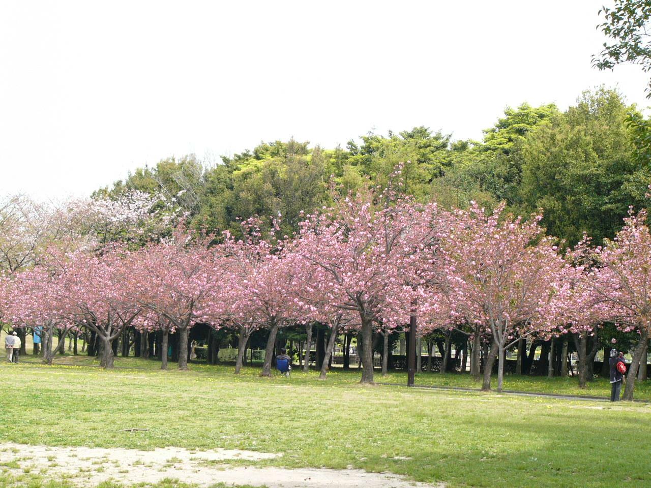 Kebun Raya Cibodas