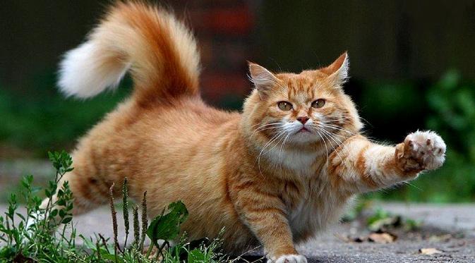 Kucing Adalah Binatang Lucu dan Dijadikan Binatang Peliharaan Raja-Raja Mesir