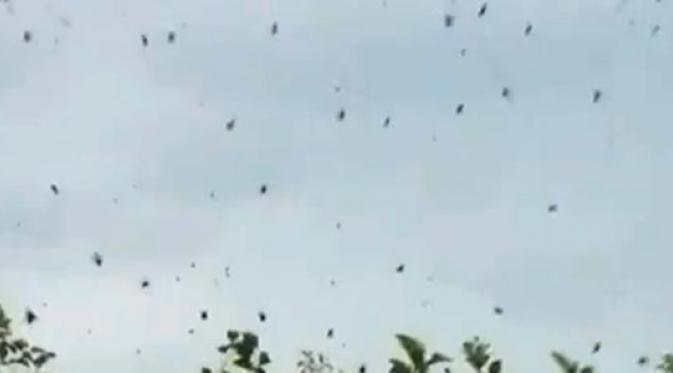 hujan laba-laba
