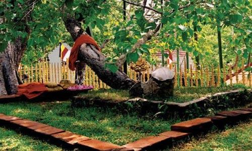 pohon siddharta gautam