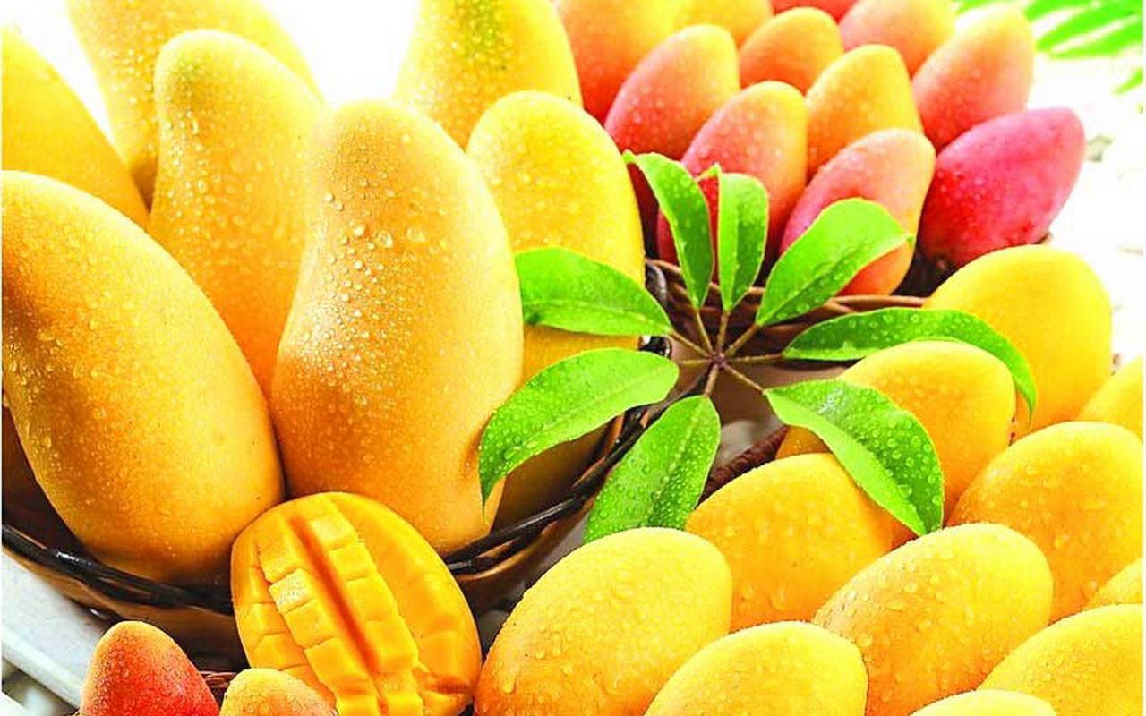 buah-mangga, manfaat dan macam buah tropis