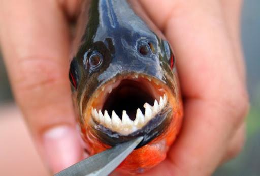 Hayooo Siapa Mau Makan Ikan Bertampang Serem Ini. Idih Gak Mimpi, Iya kan?