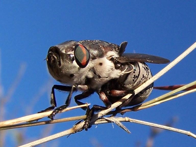 lalat-bot