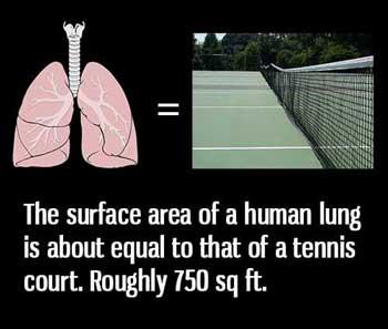 paru-paru-perokok