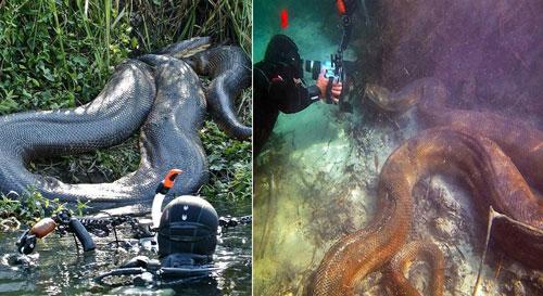 ular-anaconda-raksasa