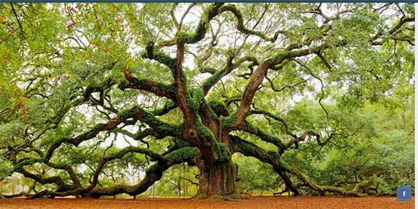 Belajar Kebaikan Dari Alam Dengan Memahami 4 Filosofi Pohon Berikut!