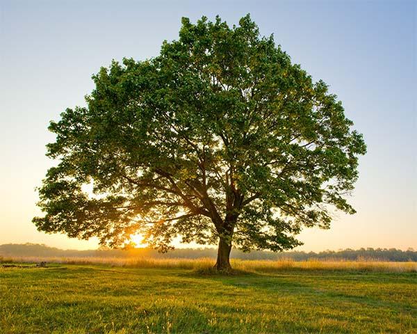 Pohon tumbuh menuju cahaya