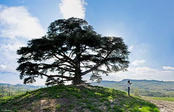 Pohon memberi oksigen bagi makhluk hidup