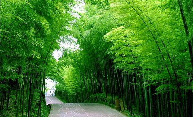 filosofi warna hijau