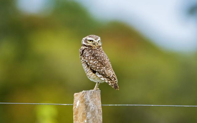 Filosofi Burung Hantu Senang Menyendiri