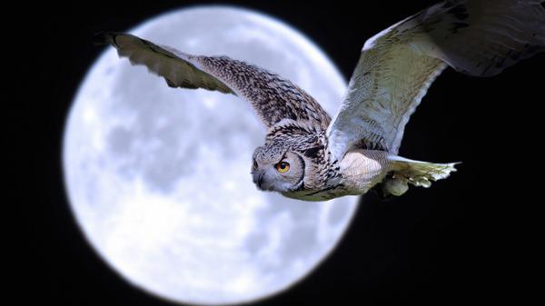 Filosofi Burung Hantu Suka Tantangan