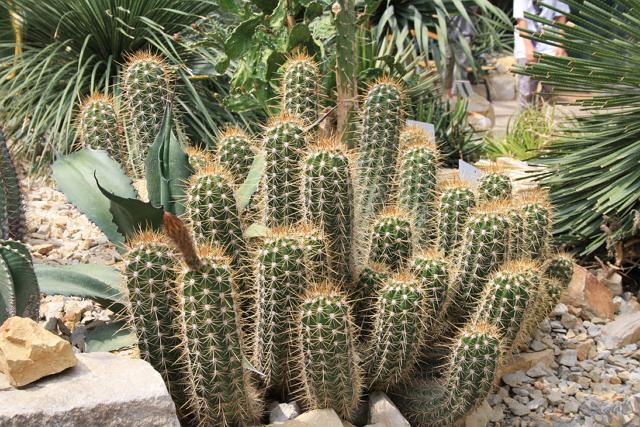Filosofi Kaktus Tidak Manja