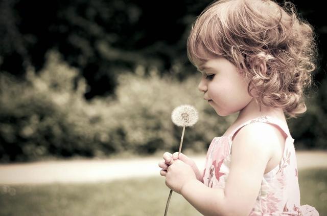 Filosofi bunga dandelion cinta