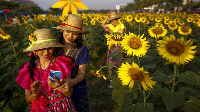 Filosofi bunga matahari ceria