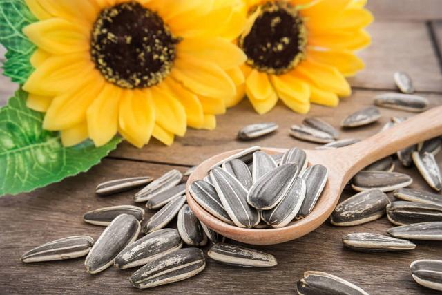 Filosofi bunga matahari manfaat