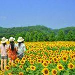 6 Filosofi Bunga Matahari yang Melambangkan Keteladanan Hidup