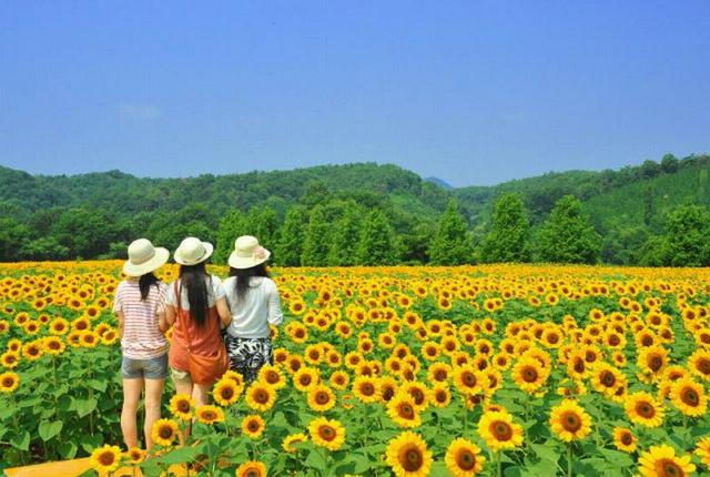 Filosofi bunga matahari persahabatan