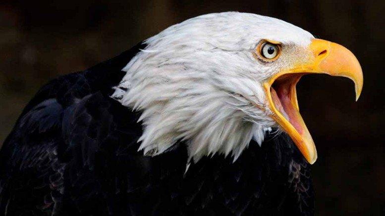 Filosofi Burung Elang