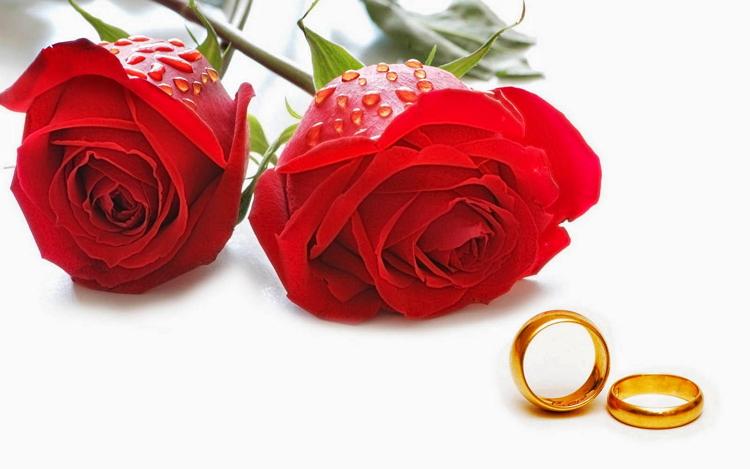 Filosofi bunga mawar merah