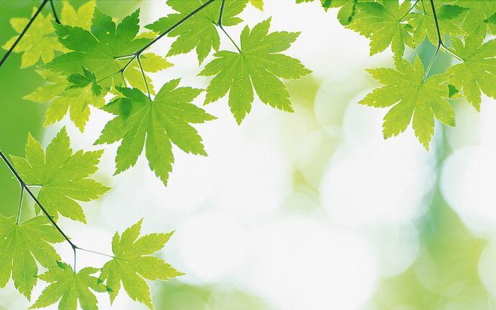 Filosofi daun hijau