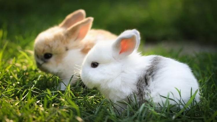 5 Filosofi Kelinci yang Bakal Membuatmu Lebih Mampu Mengolah Hati picture