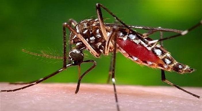 Sifat Buruk Nyamuk