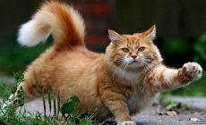 Permalink to Kucing Adalah Binatang Lucu dan Dijadikan Binatang Peliharaan Raja-Raja Mesir