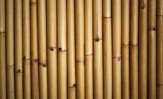 Permalink to 4 Filosofi Bambu yang Senantiasa Tumbuh dan Berjuang dalam Hidup