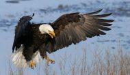 Permalink to 6 Filosofi Burung Elang yang Tangguh Mengarungi Kehidupan