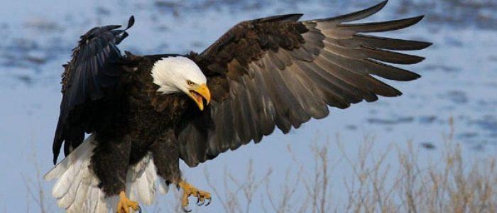 6 Filosofi Burung Elang yang Tangguh Mengarungi Kehidupan
