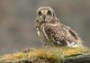 Permalink to 5 Filosofi Burung Hantu yang Tidak Semenyeramkan Namanya