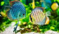 Permalink to 5 Filosofi Ikan yang Ternyata Mirip dengan Karakter Pak Jokowi