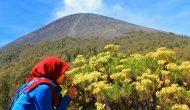 Permalink to 5 Filosofi Bunga Edelweis Lebih dari Sekadar Bunga Dataran Tinggi