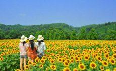 Permalink to 6 Filosofi Bunga Matahari yang Melambangkan Keteladanan Hidup