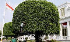 Permalink to 6 Filosofi Pohon Beringin Biar Jadi Pribadi yang Lebih Tangguh