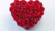 Permalink to 3 Filosofi Bunga Mawar Merah yang Sarat Romansa