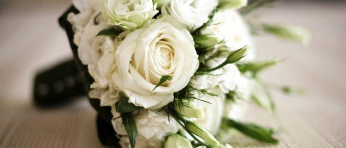 5 Filosofi Bunga Mawar Putih yang Punya Makna Tersembunyi