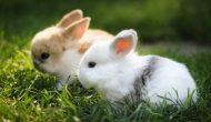 Permalink to 5 Filosofi Kelinci yang Bakal Membuatmu Lebih Mampu Mengolah Hati