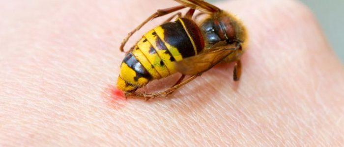 4 Filosofi Lebah yang Mengajarkan Kita Tentang Keselarasan Hidup