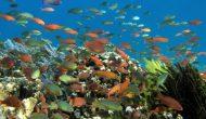Permalink to Bersyukur Yuk Sama Tuhan Atas 10 Keindahan Alam Indonesia Berikut Ini