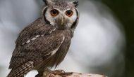 Permalink to Tak Melulu Seram, 5 Sifat Burung Hantu Ini Patut Kita Teladani