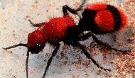 Permalink to Jangan Sepelekan Sengatan Serangga Kecil Karena Akibatnya Cukup Mematikan