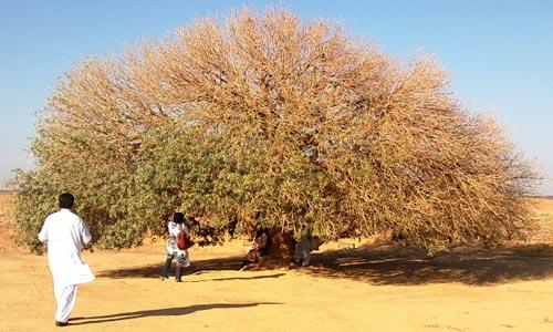 Permalink to Amati Pohon-Pohon Paling Bersejarah di Muka Bumi Ini