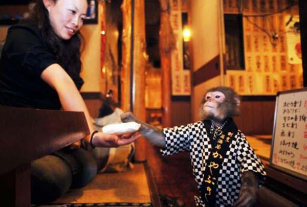 Pengunjung sedang dilayani oleh seekor monyet