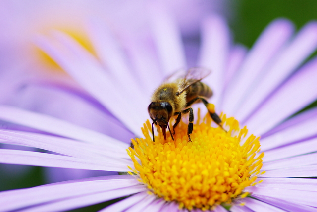 Permalink to 4 Filosofi Lebah, Si Serangga Kecil Produsen Madu