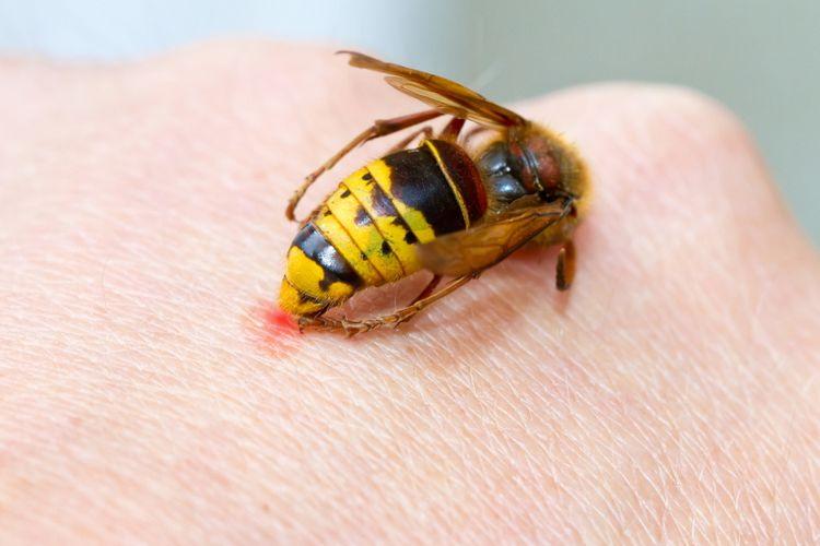 Permalink to 4 Filosofi Lebah yang Mengajarkan Kita Tentang Keselarasan Hidup